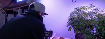 How to grow weed in your closet